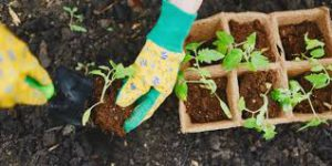 کود کشاورزی ارگانیک