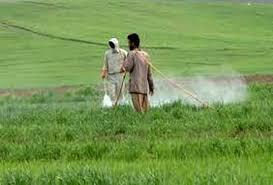 سموم کشاورزی اکسین
