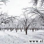 فروش کود زمستانه مورد نیاز درختان میوه