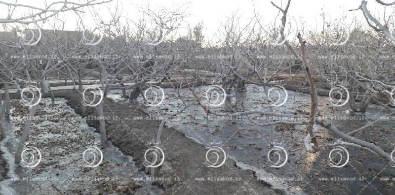 آبیاری زمستانه باغات