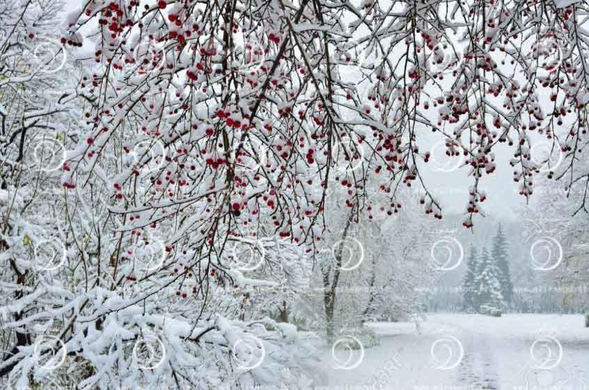 نگهداری زمستانه باغات